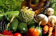 水果蔬菜 农业