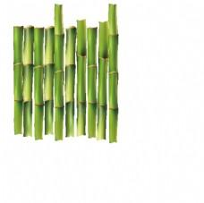 竹子 矢量