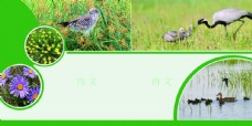 绿  背景  图片  湿地
