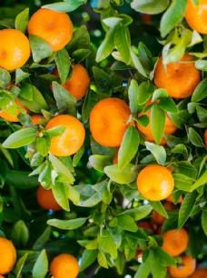 水果海报 水果素材 绿色素材