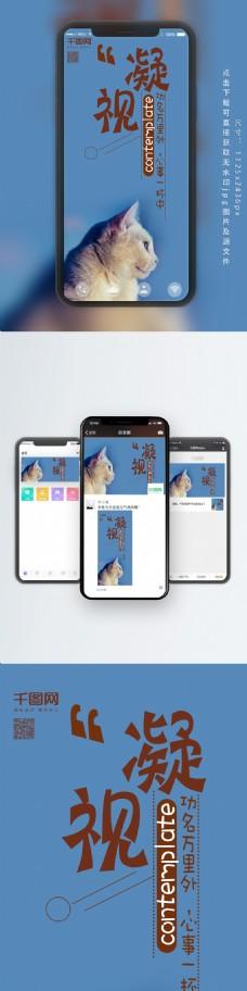 手机用图日签猫咪蓝色背景凝视