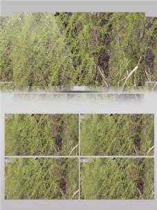 阳光穿过柳树视频音效