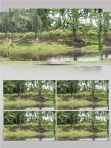 公园溪边的柳树视频音效