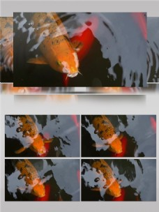 鱼儿游动嘴巴露出水面呼吸视频音效