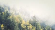 雾气和雪花充满了森林