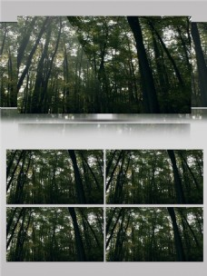 海洋一样的绿色森林视频音效