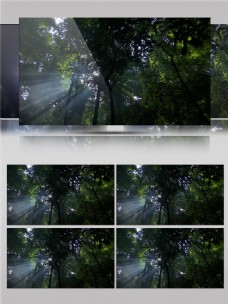 阳光穿过森林视频音效
