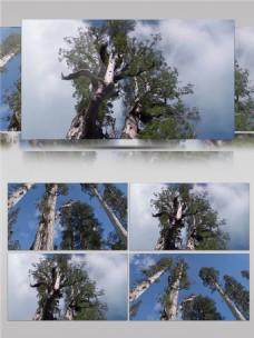 泰国景点公园视频音效