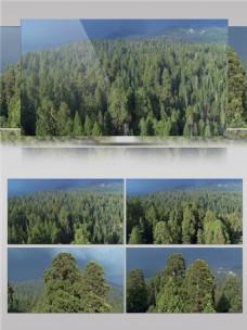 中国保护自然区森林视频音效