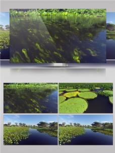 绿色水下植物视频音效
