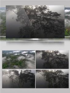 热带雨林晨雾视频音效
