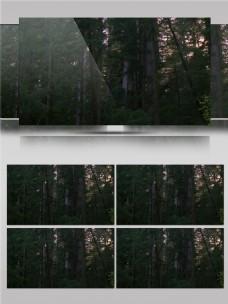 茂密的森林漫步视频音效