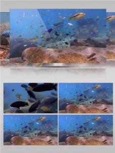 海底热带鱼视频音效