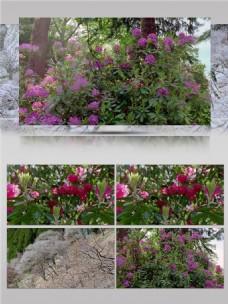 花园里盛开的紫色花视频音效