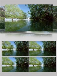 湿地公园视频音效
