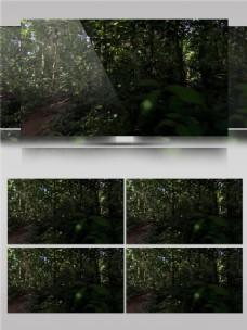 生机勃勃的树木视频音效