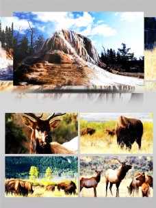 超清动物草原自然风景
