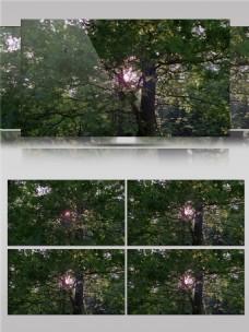 缝隙中穿透树木视频音效
