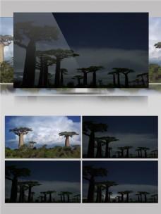 雷电云彩下的植物视频音效