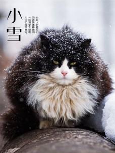 诗意小雪里的胖猫海报
