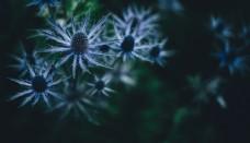 植物 多肉植物 植物摄影 摄影