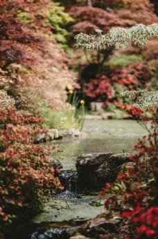 秋天 背景 自然 季节 植物