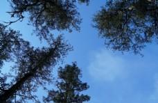 天空下的树冠