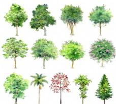 手绘 园林 立面 树 psd