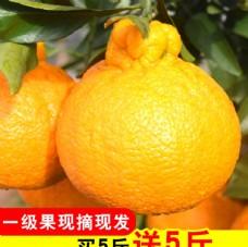 丑橘直通车