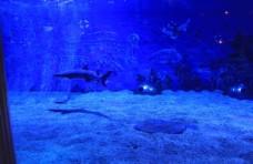 高清海洋动物摄影图