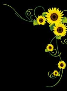 透明花背景 创意花设计 矢量花