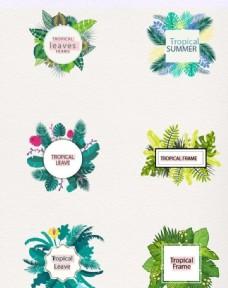 热带树叶素材