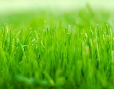 绿植绿叶树叶