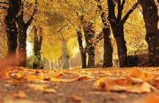 秋天金黄色