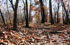 铺满落叶的树林