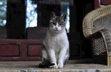 小猫的凝视