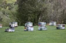 新西兰蜂箱