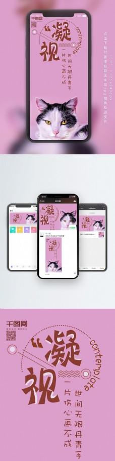 手机用图日签猫咪黑白凝视