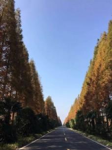 道路  天空  沿路  树